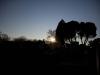 sun-low-on-horizon-mount-carmel-cemetery
